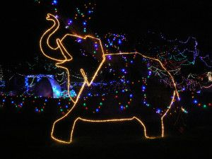 A fun and festive way to support #ReidParkZoo