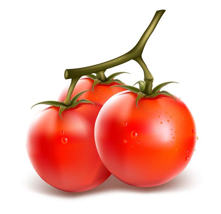 free vector Realistic vegetables vector