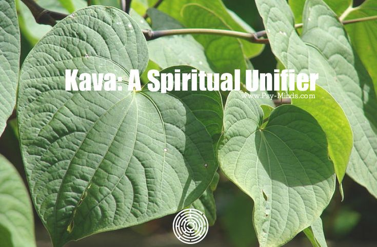 Kava: A Spiritual Unifier - @psyminds17