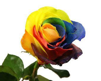 Do Roses Come Naturally In The Color Blue