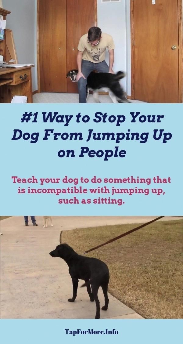Stop Dog Jumping And Dog Training Tips Biting Check Pin For