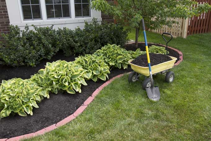applied in a bed of shrubs around lanscaping of brick ranch house. Includes a wheelbarrow and shovel to the right.
