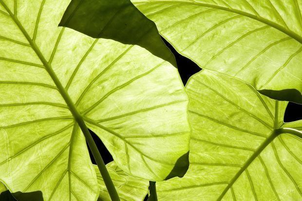 Pin Auf Schattenpflanzen