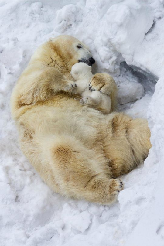 "tulipnight: "" Mother's love by Anton Belovodchenko ""                                                                                                                                                                                 Mais"