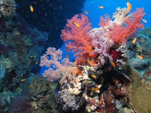 Red Sea Reef: Nature Wonder, Nature Weaths, Pastel Colours, Red Sea Egypt, John Reef, Africa, Egypt Scubas, Nature Beautiful, Sea Reef Wond
