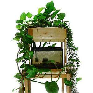 337 best images about aquaponics gardening on pinterest for Aquaponics fish tank kit