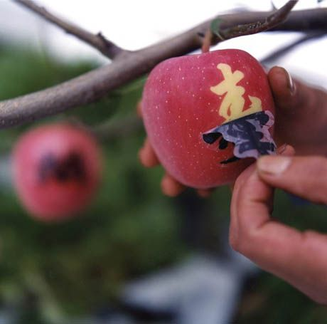 "'the most perfect of these already perfect apples are then decorated with a sticker that blocks sunlight to stencil an image onto the fruit. This ""fruit mark"" might be the Japanese kanji for ""good health"""