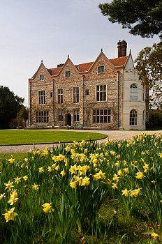 Daffodils in the UK