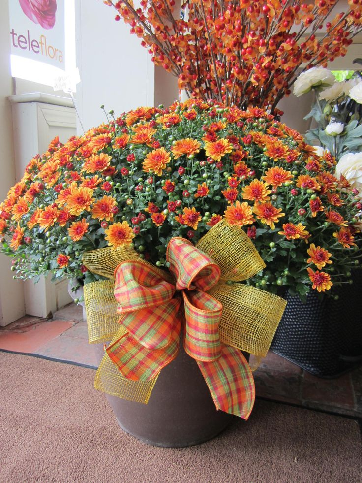 Fall Mum Plant available at Owens Flower Shop (Lawrence, KS)