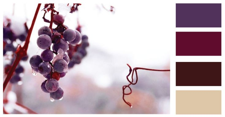 wedding color schemes for WINE | Winter Wine Wedding – Colours | Its all very dandy, dont you think ...