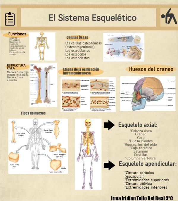 "Infografia No.2 SISTEMA ESQUELETICO - IRMA IRIDIAN TELLO DEL REAL 3° ""C"""