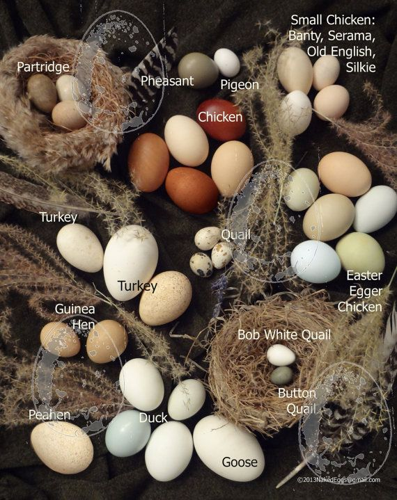30 DIFFERENT Clean Blown Eggs SHIPS after Easter for by NakedEggs