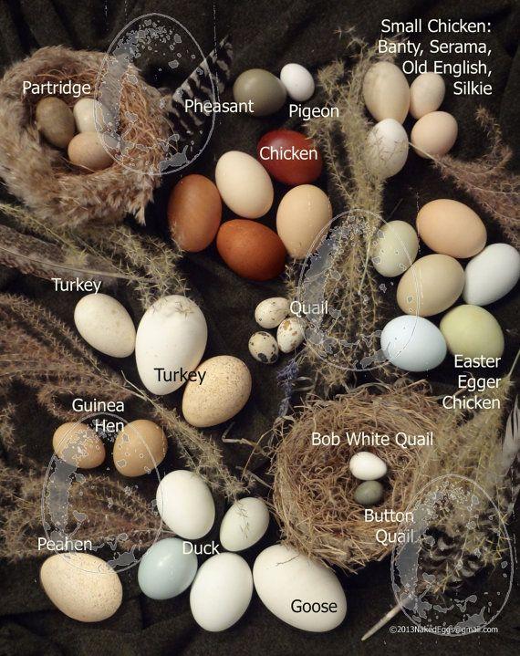 ♥ Farm Fresh Eggs ♥