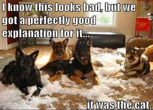 It was the cat!!Dogs Quotes, Funny Dogs, Funny Pictures, Dogs Cat, Funny Quotes, Funny Stuff, Funny Animal, German Shepherd, Dogs Funny