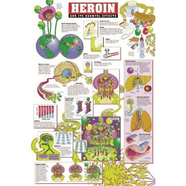 the harmful disadvantages of heroin It passes drugs that are potentially harmful this is certainly true considering the sleeping pill thalidomide in the 1950s, which caused severe deformities to thousands of babies being born the drug was definitely tested on animals, but it did lead to serious effects.