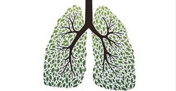 Lo sapevi che è possibile smettere di fumare con le erbe e senza soffrire molto?Ecco quali e perchè http://jedasupport.altervista.org/blog/attualita/sanita/salute-sanita/rimedi-naturali/erbe-per-smettere-di-fumare-facilmente/