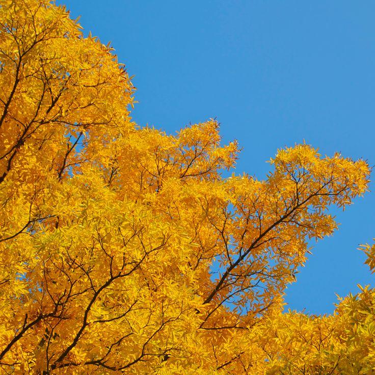 Arany színek  http://www.pepikert.hu
