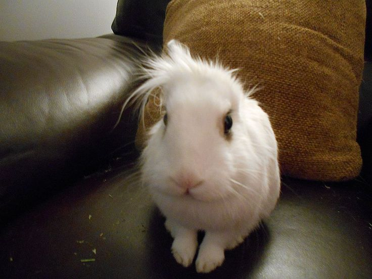 Luigi The Bunny showing off his new hairstyle.