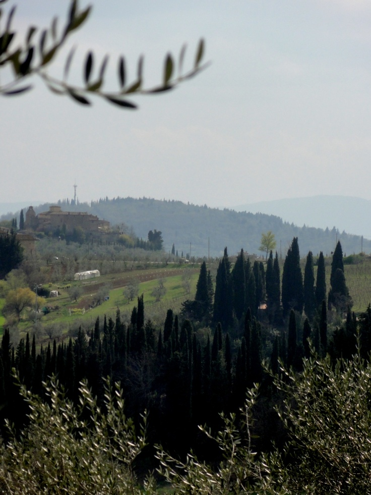 Cypresses and Olive Trees - Photo by Bianca Corti
