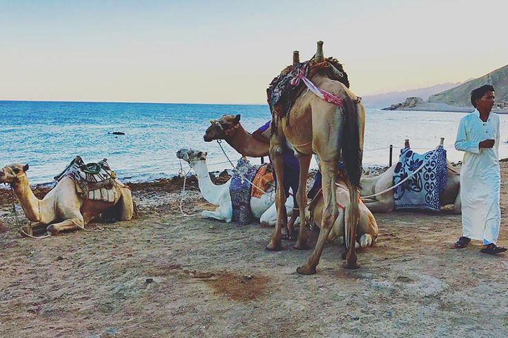 Dahab is a Bedouin village on the coast of the Sinai Peninsula. It used to be a fishing village, but it's now known as a premiere diving location. It's also known for being more laid back and much cheaper than the rest of Egypt. It's been a hippie draw since the '70s, and that vibe lives on today in the pace and quality of life.