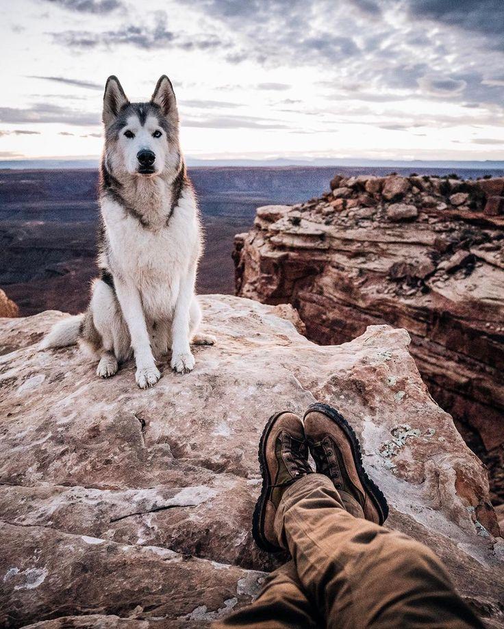 loki husky Huskies Dog Dog Education Puppy Click on the
