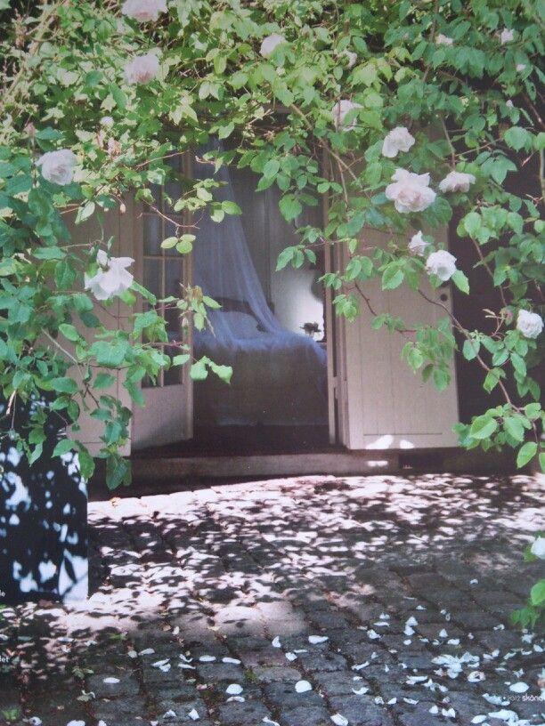 Vackert med rosenblad på marken. Tänk på sådana detaljer när du planerar din trädgård. Kullersten i st.trädgården istället för plattorna? Eller blandat.