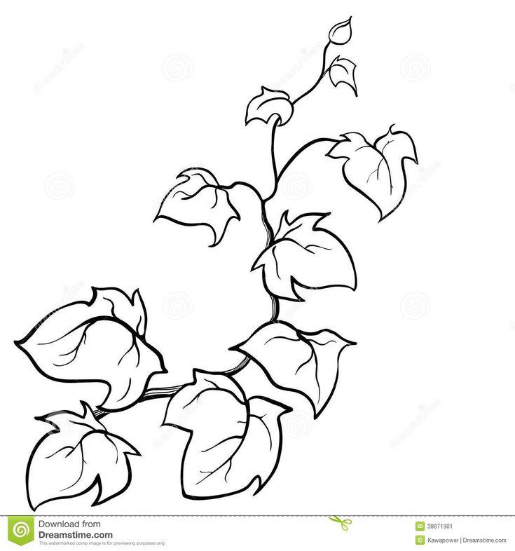 Immagine Correlata Plant DrawingNature DrawingBullet JournalVinesColoring PagesBranches