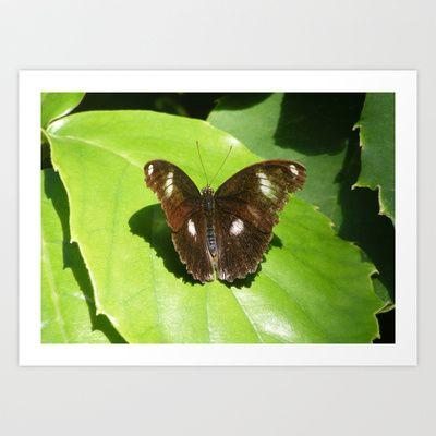Butterfly 4 Art Print by Sheridan van Aken - $20.80