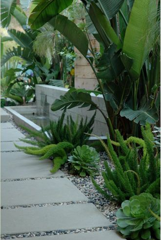 Foxtail fern with banana trees & large succulents...so green!  Pinned by Janna Schreier