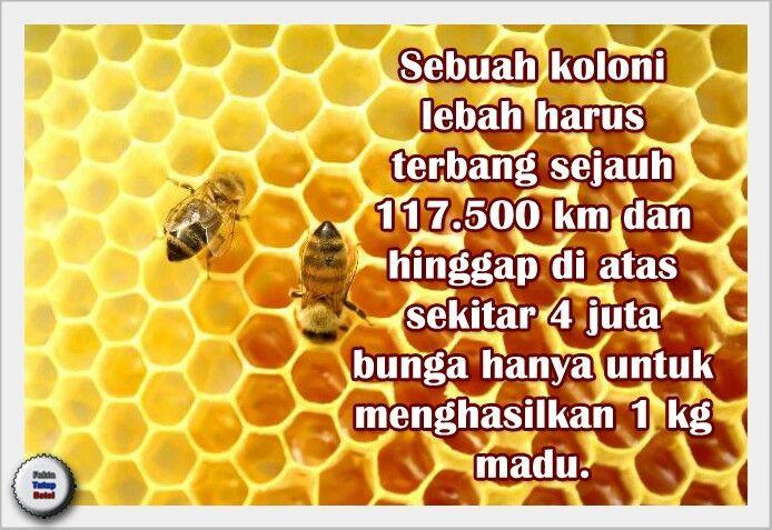 Perjalanan madu