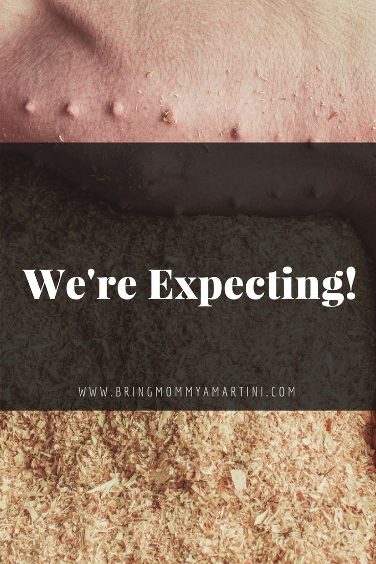 We're Expecting!  www.kristanbraziel.com/blog/2016/9/8/were-expecting  #Humor #Goldendoodle #Puppies #Parenting #MomLife #FunnyBlog