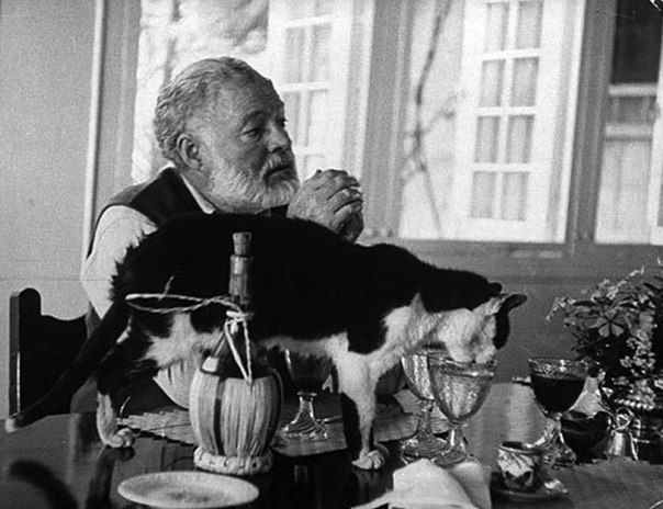 Эрнест Хемингуэй и кошки. » Смешные Анекдоты Истории Цитаты Афоризмы Стишки Картинки прикольные Игры