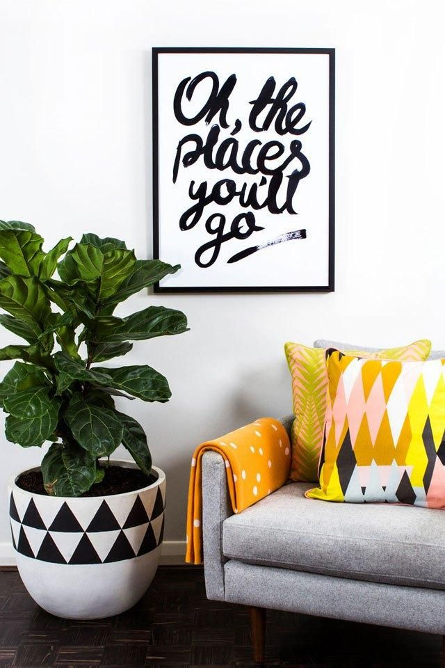 1000 ideas about bamboo palm on pinterest ficus for How much sunlight do succulents need