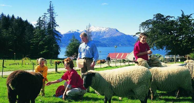 Family experiences in New Zealand