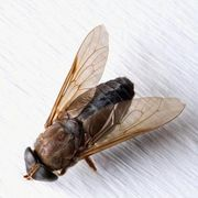 A Homemade Remedy to Get Rid of Fruit Flies & Gnats in the Yard   eHow