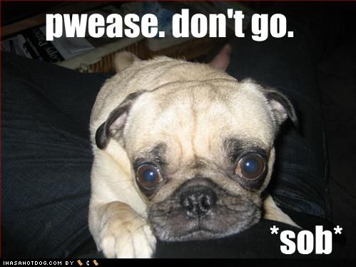 Funny pug pictures With Captions - Bing Images