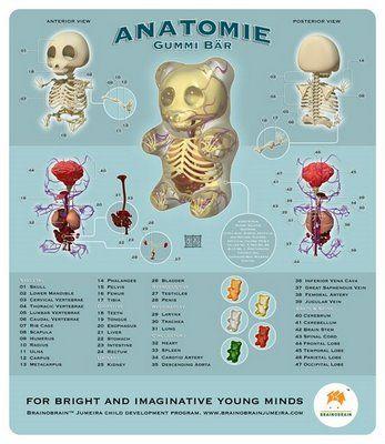 Anatomy of the gummy bear