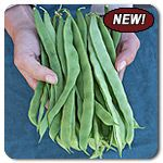 """Organic Northeaster Pole Bean - The buttery flavor and hearty texture of this Romano bean will take your garden by storm! So named for its suitability in short-seasoned climes, Northeaster is consistently one of the earliest pole beans in our trials. Flattened, pale green pods grow 7-8"""" in length on tall, vigorous vines. Our 2012 trials crew loved picking this variety because plants climb well and beans are easy to distinguish from the foliage."""