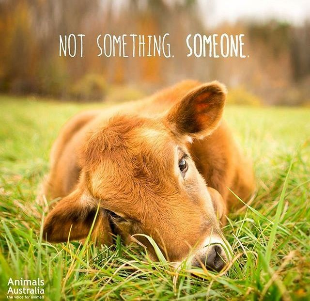 Are you guilty of selective compassion? Are you a speciesist? Are you for or against animal cruelty? People who believe at heart that it is wrong to harm animals for personal pleasure or profit are already professing vegan beliefs. Their next logical step is to align their core values with their everyday actions and lifestyle by going vegan. So what's stopping YOU? www.vegankit.com and www.freefromharm.org