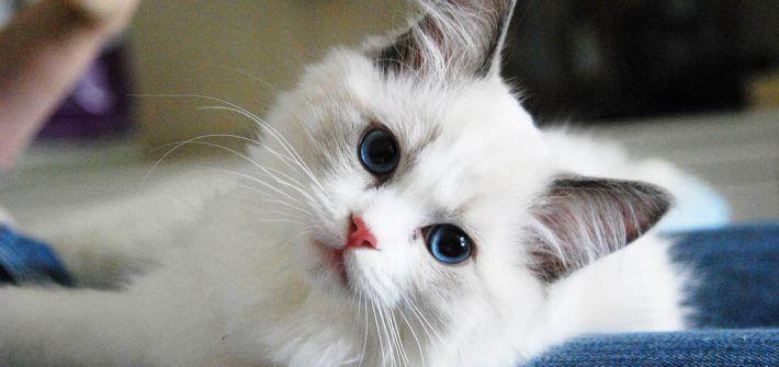 Slotxo โคตรเซ ยน แตกหน ก แจกโปรโมช นจ ดหน ก แจกเง น 100 Xojoker สล อตออนไลน สล อตxo แมวน อย แมว