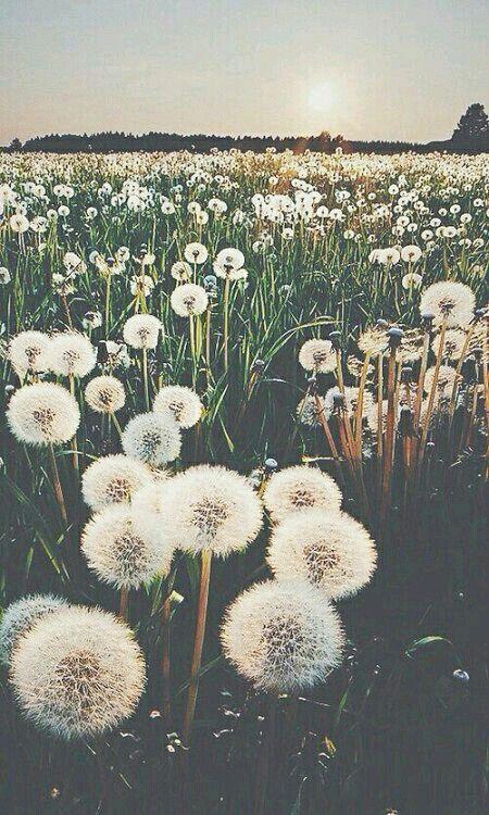 Her gün bir çiçek açar gönlümde ve ben senin ismini koydum o bahçeye