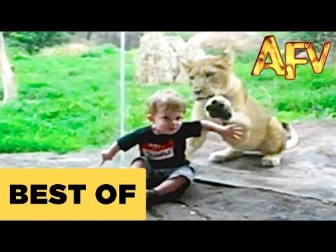 Kids At The Zoo | AFV