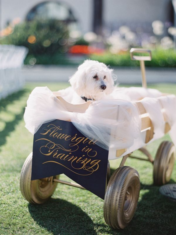 Dog Flower Girl in Wagon | photography by http://www.esthersunphoto.com