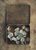 Tin of hydrangea