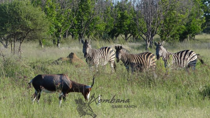Photo of the Day : TOUCH this image: Blesbuck & Zebra-DinokengGameReserve by Xombana