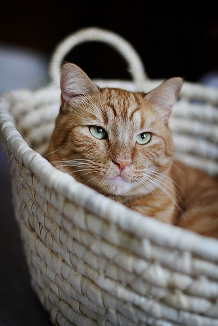 basket bliss | by falafelicious on Flickr.
