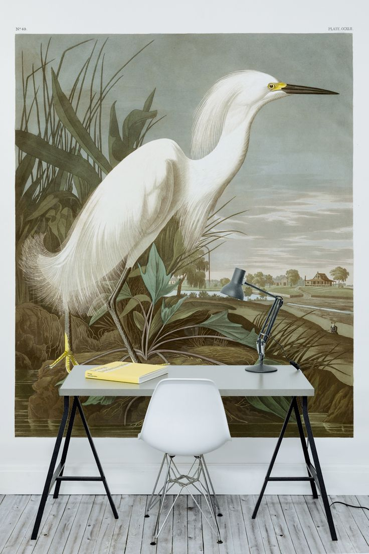 Looking for a different way to dress your walls? Take a look at this awe-inspiring painting by John James Audubon in his Birds of America collection. This bird wallpaper adds a touch of class and intrigue to any interior.