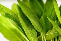 Sage herb (salvia officinalis) is a perennial shrub with soft, finely toothed leaves that have various uses. It is used for culinary, medicinal as well as landscaping purposes. The main uses of sage herb are discussed below.