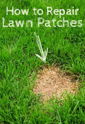 How to repair lawn patches exterior outdoors garden for How to fix dog urine spots on lawn