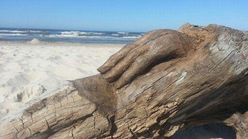Left hand. Wood sculpture. Debki beach. Poland... hand made by Rob Roy...